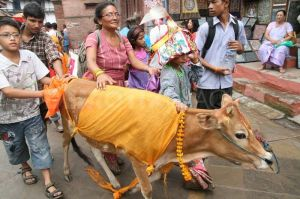 festa nepal gai jatra 01